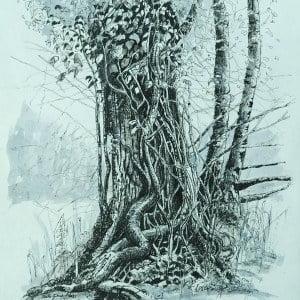 Ivy clad oak 6, limited edition Giclee print, large, framed