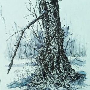 Ivy clad oak 4, Limited edition print, large, framed
