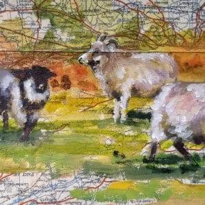 framed sheep 5