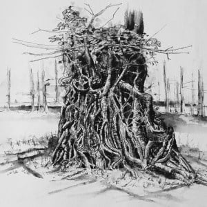 Ivy clad oak 1, Limited edition print , large, framed