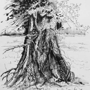 Ivy clad oak 2, Limited edition print , large, framed