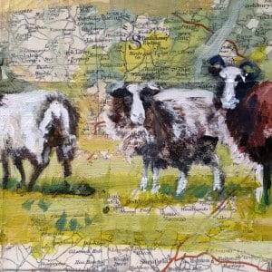framed sheep 4
